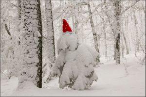 Tanne-Schnee_2